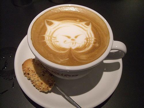 Cat coffee (akaitori / Flickr / CC)