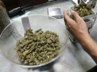 An employee places marijuana for sale into glass containers at The Station, a retail and medical cannabis dispensary, in Boulder, Colo., Thursday, Aug. 11, 2016. The DEA announced Thursday, Aug. 11, 2016 that the Obama administration will keep marijuana on the list of the most dangerous drugs, despite growing popular support for legalization, but will allow more research into its possible medical benefits. (AP Photo/Brennan Linsley)