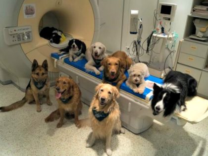Doggie MRI Borbala FerenczyMR Research Center via AP