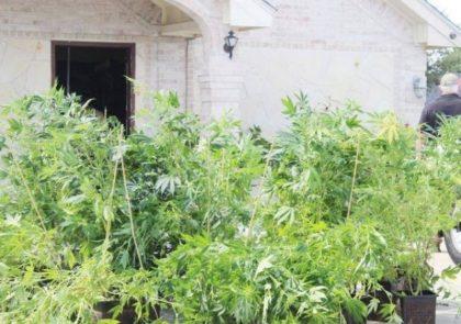 Marijuana house 1