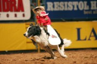 UNITED STATES - DECEMBER 11:  Rodeo: National Finals, View of monkey riding dog, animal at Thomas & Mack Center, Las Vegas, NV 12/11/2004  (Photo by Darren Carroll/Sports Illustrated/Getty Images)  (SetNumber: X72462 TK4)