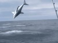 Mako shark (Screen shot / Facebook)