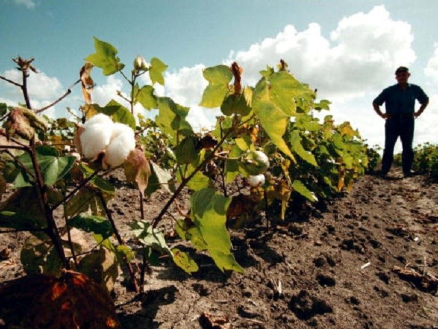 Farmers weigh options as 2008 Farm Bill extended for one ... |Texas Agriculture