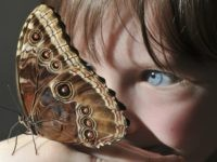 Ettie Wooldridge studies a butterfly at the Natural History Museum's 'Butterfly Explorers' exhibition in west London, on March 31, 2010. The exhibition features examples of butterflies from all over the world and offers visitors the chance to learn how they live in different climates. AFP PHOTO/Leon Neal (Photo credit should …