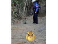State Dept.: Tweet Warning Pokemon Go Players to Avoid Landmines Not a Joke