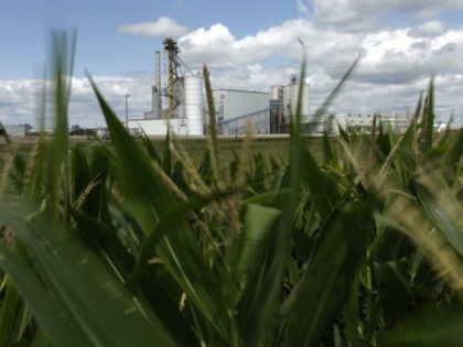FILE - In this July 20, 2013, file photo, an ethanol plant stands next to a cornfield near Nevada, Iowa. The Obama administration has failed to study as legally required the impact of requiring ethanol in gasoline and ensuring that new regulations intended to address one problem do not actually …