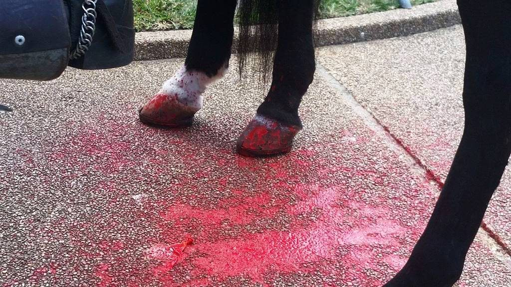 Red paint-filled balloons thrown at feet of police horses. (Photo: John Binder/Breitbart Texas)