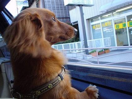 dog in car (Masao Hirasawa / Flickr / CC)