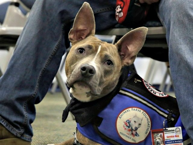 Can Emotional Support Dogs Fly