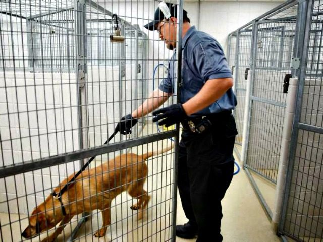 dog catcher Rebecca S. Gratz, AP