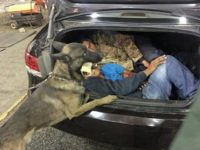 Armed Smuggler, Two Migrants Found at California Immigration Checkpoint