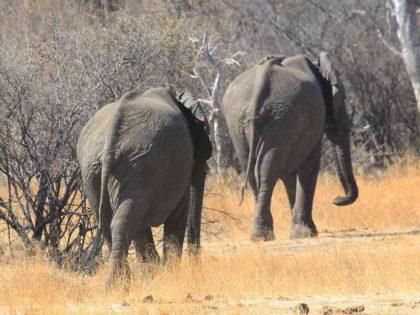 Elephants retreat (Tsvangirayi Mukwazhi / Associated Press)