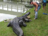 Saurage with Gator