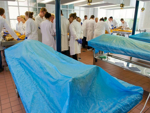 Medical students work on a body in the dissection hall of the medical department of the University of Greifswald in Greifswald, Germany, 05 July 2016. Body donors are considered an indispensable contribution to teaching and training by helping prospective dentistry and medical students as well as human biologist acquire basic …
