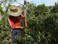 Scientists Debunk Climate Change Panic Behind 'Coffee Fungus'
