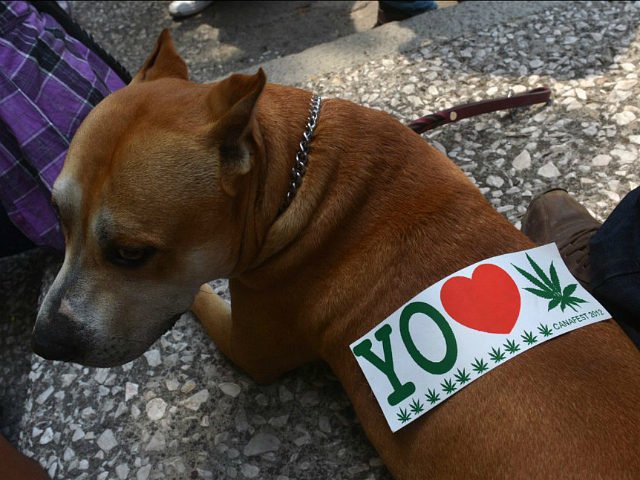 A sticker is seen on a dogs back during a demo in support of the legalization
