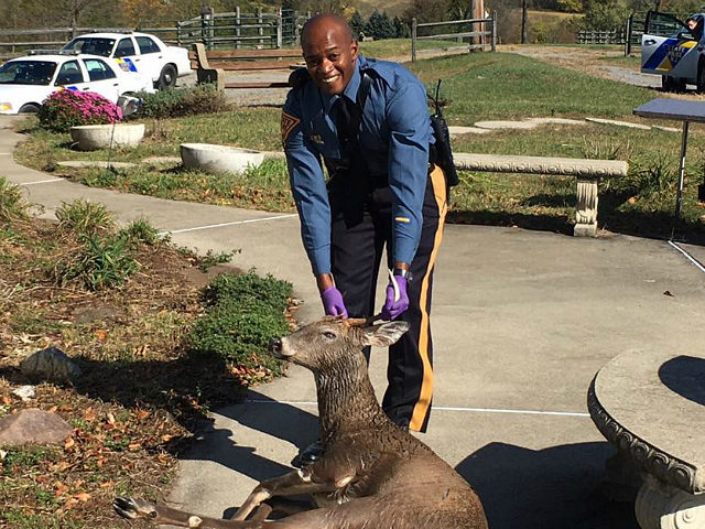 NJ State Police Officer Rescues Drowning Deer from Pool
