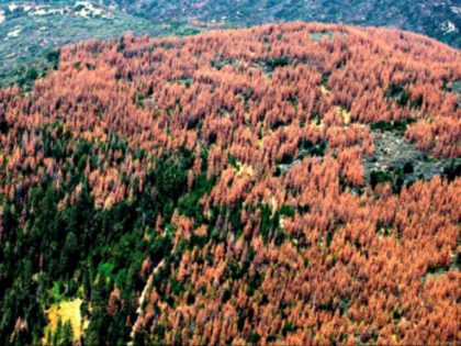 Dead Trees Flickr:USFS