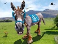 Democrats-Donkey-Flickr