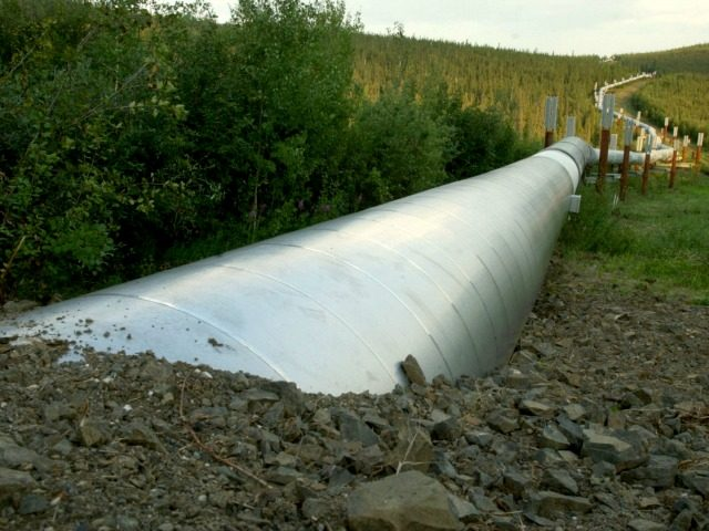 A buried section of the Trans-Alaska Pipeline emerges a few miles north of the Yukon River on July 21, 2002 in Fairbanks, Alaska. The 800 mile pipeline carries crude oil from Prudhoe Bay to the ice free port of Valdez, Alaska. (Photo by )