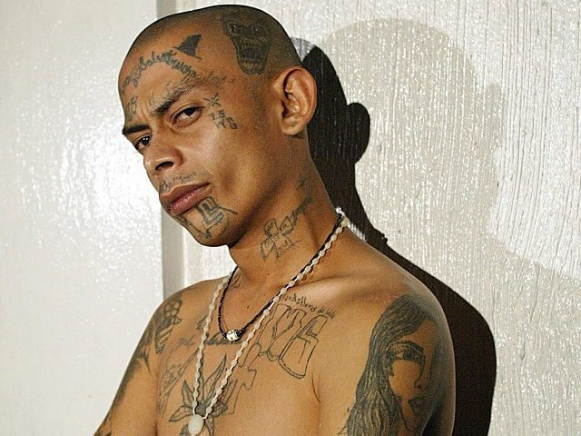 "One of the leaders of the gang known as ""mara salvatrucha"" shows his tatoos after being arrested by police 24 July, 2003 in a poor neighborhood of the outskirts of San Salvador during an operation called ""Firm hand"". The operation was ordered by President Francico Flores trying to eradicate gang …"