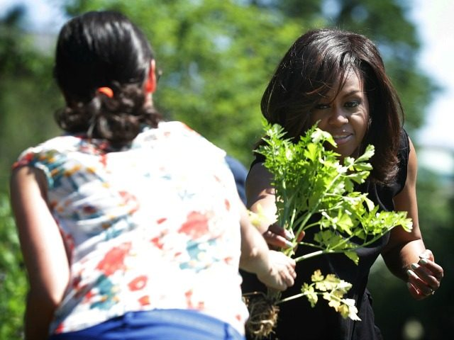 Michelle Obama participates in a White House Kitchen Garden harvest June 6, 2016 at the White House in Washington, DC.