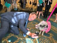 Sen. Jeff Flake and Pot Bellied Pig AP