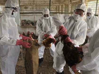 India Documents Its First Bird Flu Death