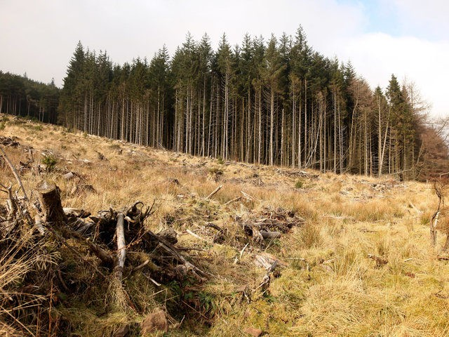BRECON, UNITED KINGDOM - FEBRUARY 06: Deforested coniferous woodland is seen adjacent to the Neuadd Reservoir in the Brecon Beacons National Park on February 6, 2010 in Brecon, Wales. The Brecon Beacons in South Wales were assigned national park status in 1957 and each year they attract 3.8 million visitors. …