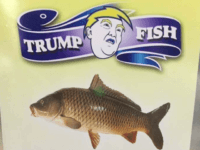 Kurds Open 'Trump Fish' Restaurant