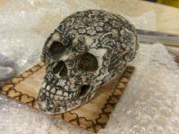 Drugs in Skull