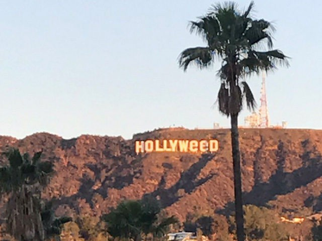 Hollyweed2017