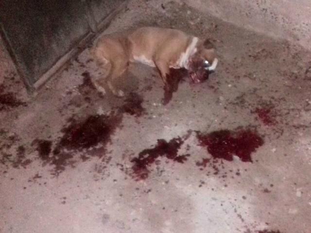 Los Zetas Murdered Dog