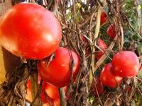 RottingTomatoes