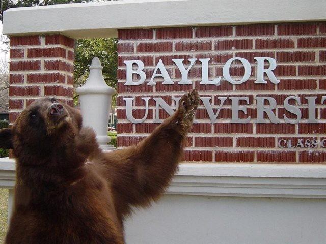 Baylor Bear