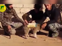 Video: Shiite Militia Finds Puppy Strapped with Islamic State Explosives