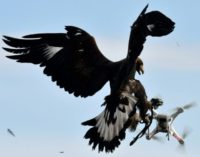 A royal eagle catches a drone during a military exercise at the Mont-de-Marsan airbase, southwestern France