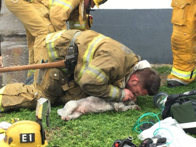 SMFD CPR dog (Billy Fernando/ SMFD / Facebook)