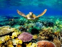 Delingole: Climate Skeptic Professor Fired for Telling the Truth About the Great Barrier Reef