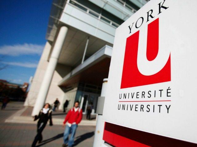 york university canada