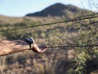 Barbed Wire Fence at Border