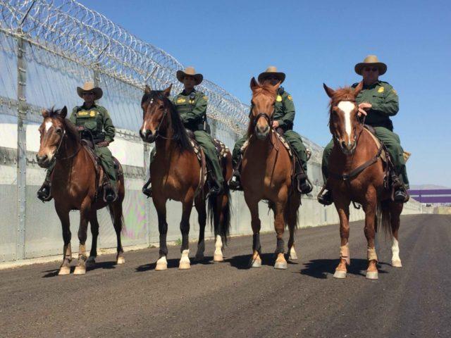 Border Patrol horses (Joel Pollak / Breitbart News)