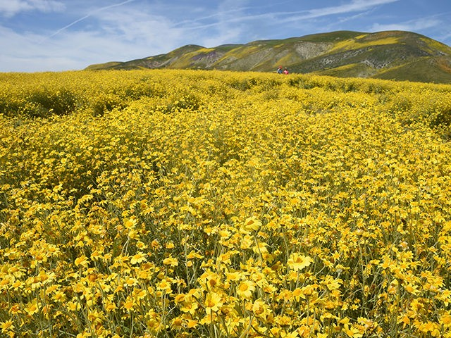 CA-superbloom-April-5-Getty