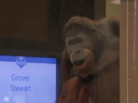 No Monkeying Around: NFL Network's Mayock Threatens to Walk Off Set After Orangutan Announces Draft Pick
