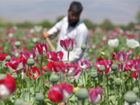 Iran Battles Opium Epidemic, Addicts Double in Six Years