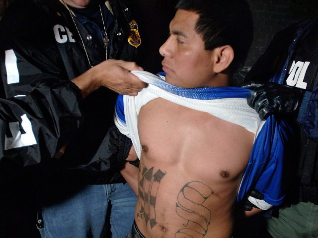HOLD PHOTOS UNTIL AFTER 7PM----U.S. Immigration and Customs Enforcement agents lift the shirt to display tattoos of a Salvadoran man believed to be a member of the MS-13 gang as he is arrested in an early morning stakeout in Chelsea, Mass. Wednesday, June 15, 2005. The man, who has been …