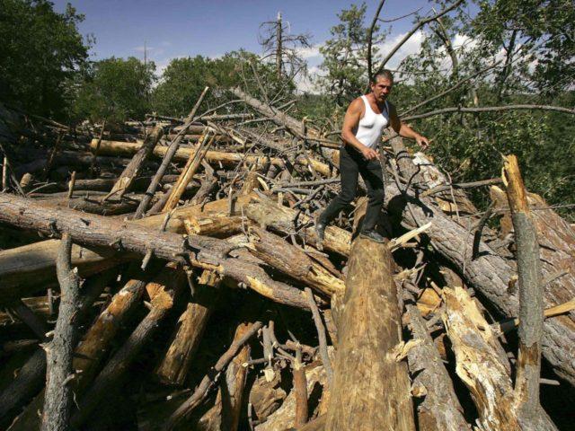 California logging (David McNew / Getty)