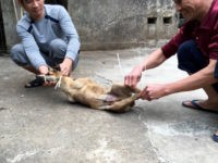 Report: Global Backlash Forces Chinese City to Ban the Eating of Cats and Dogs