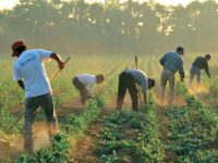 Illegal Migrant Workers-Getty