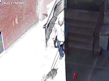 Man Steals Service Dog Daily News